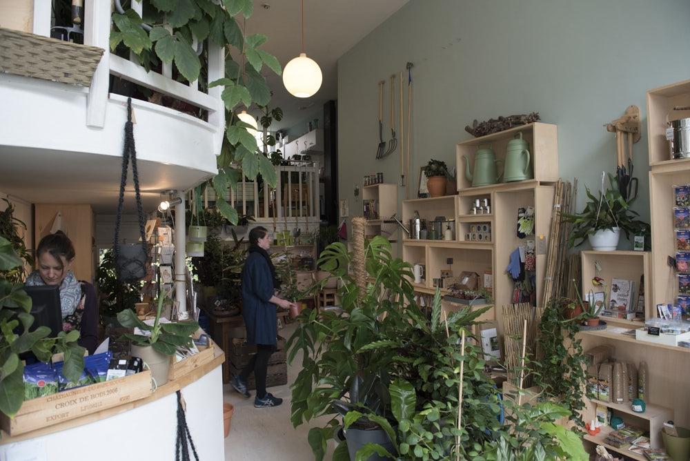 Plants at STEK store