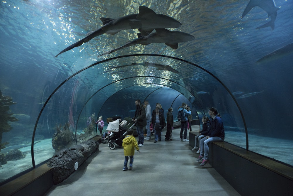 underwater tunnel at Oceanium