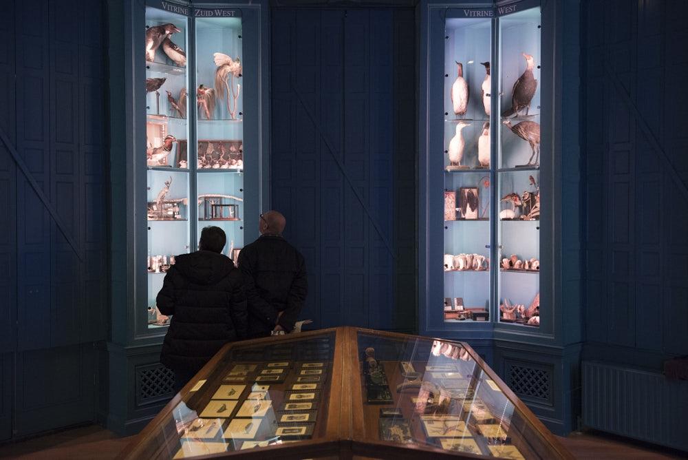 visitors at Natural History Museum