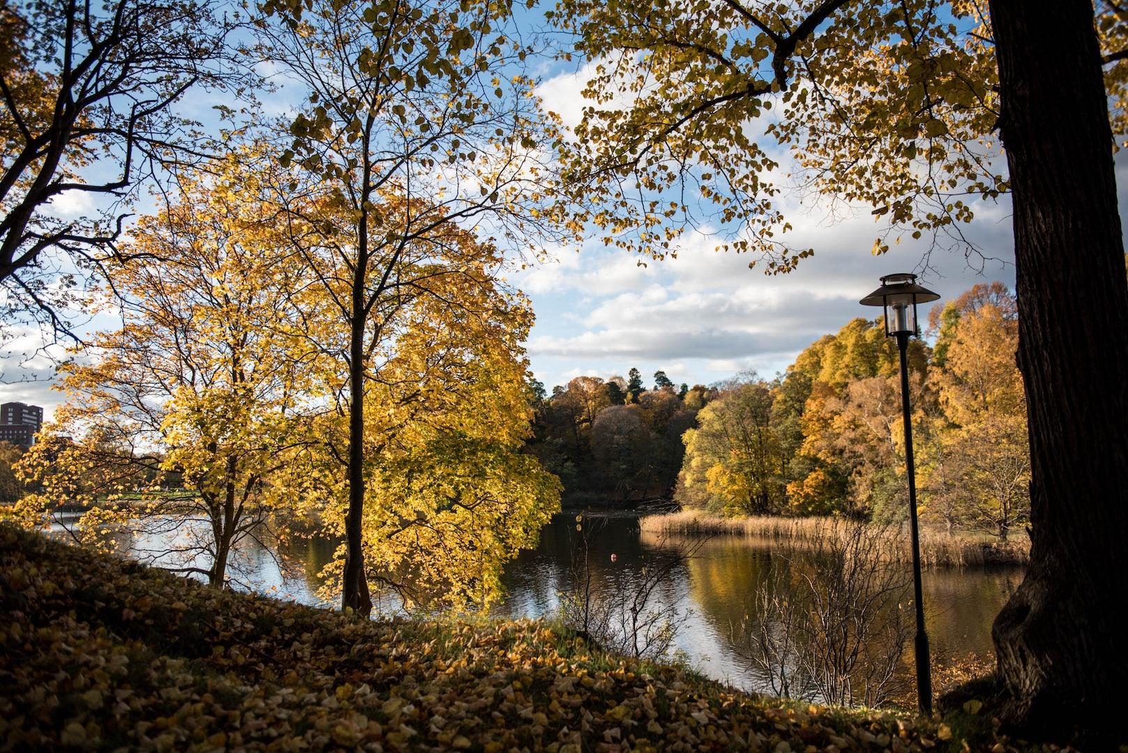 trees during autumn in Bellevueparken Stockholm