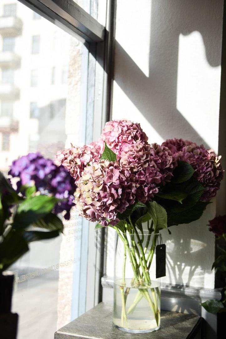 pink Hydrangea flowers from Bladverket