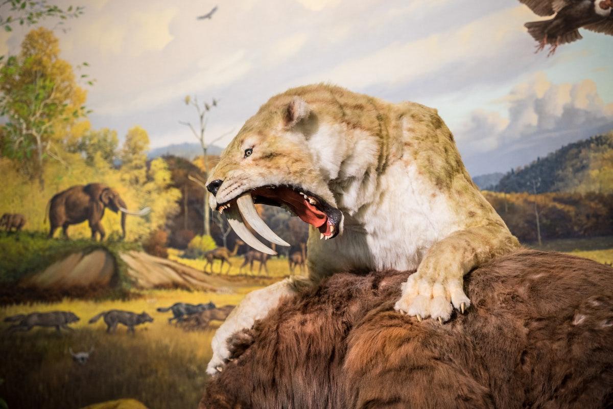 a saber-toothed cat at La Brea Tar pits
