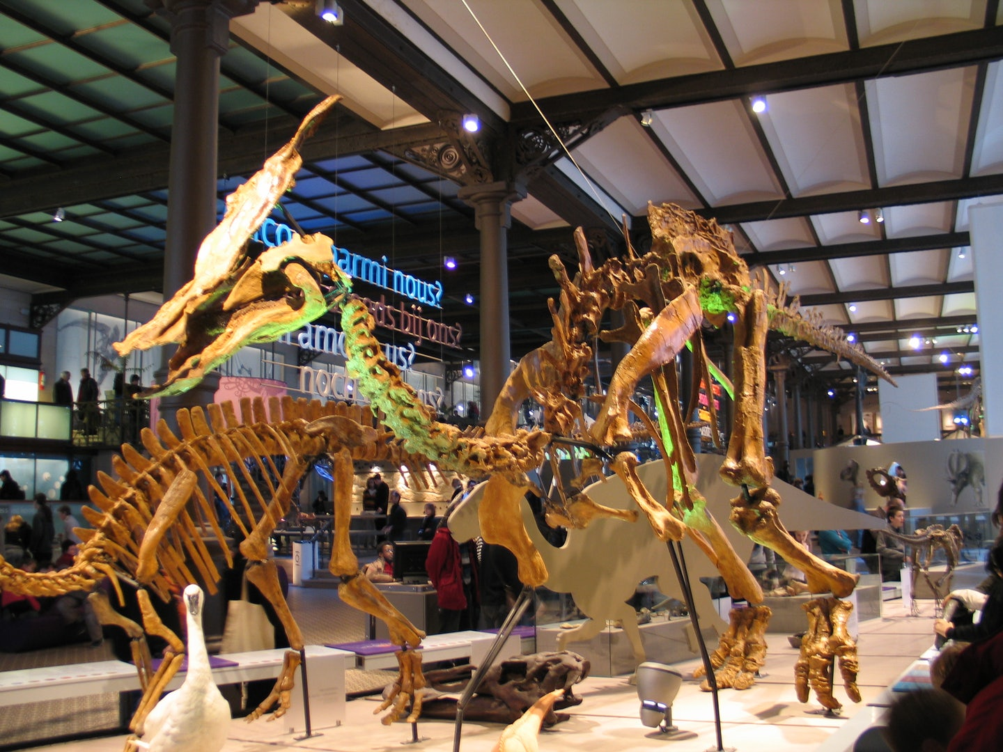 model of a dinosaur at the Brussels museum of natural sciences