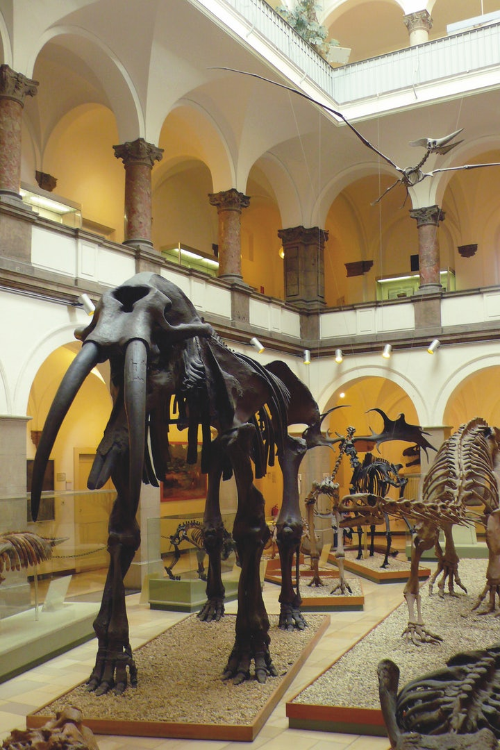 skeleton of a mammoth at the Paläontologisches Museum
