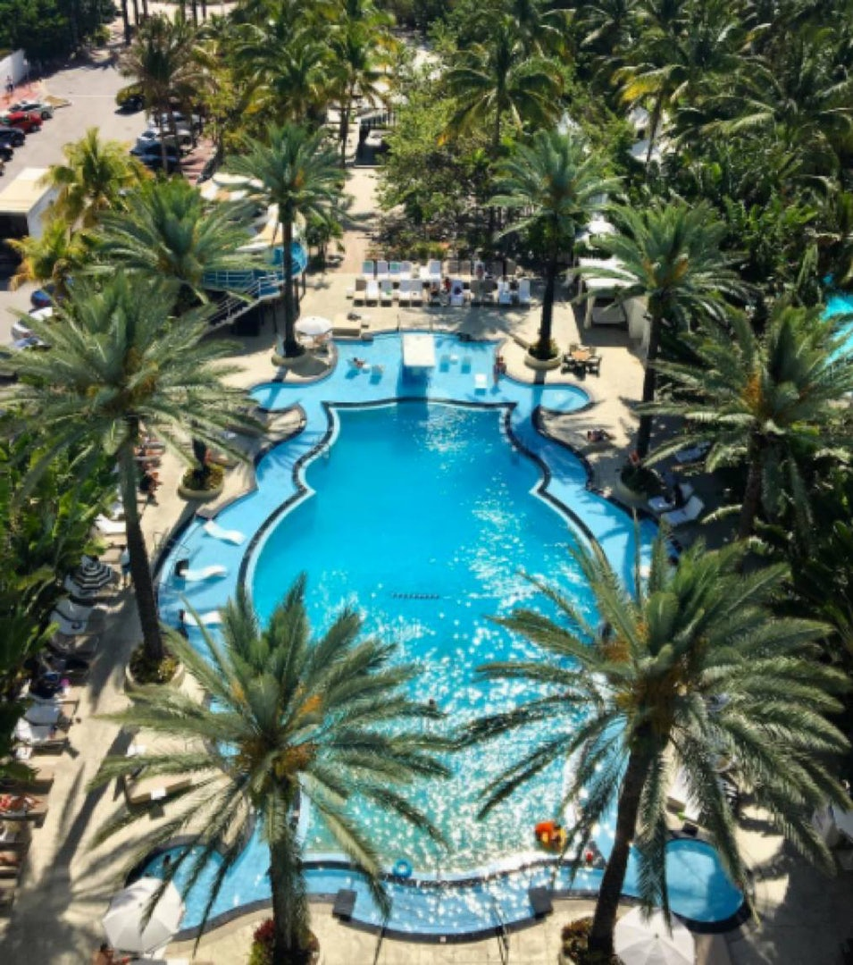 hotel swimming pool surrounded by palm trees at The Raleigh