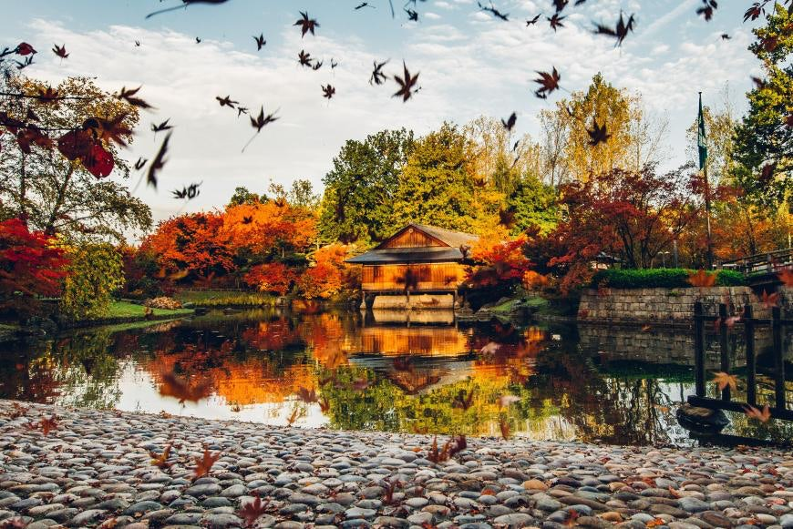 Japanese Garden during autumn