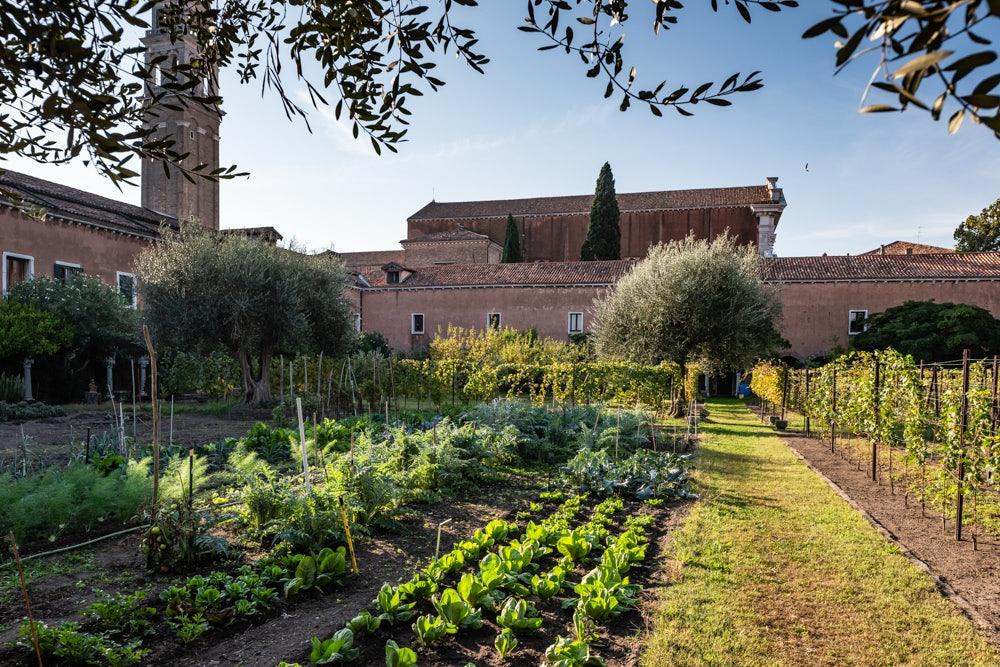 herbs and greens at the Garden of San Francesco Della Vigna Church