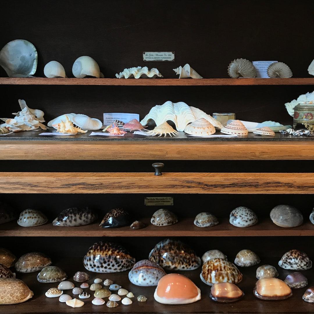 shells on display at Schelpenmuseum