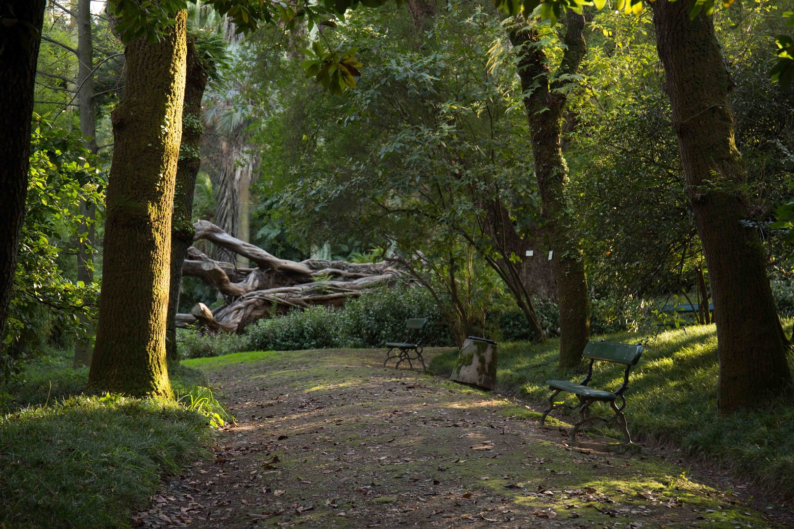 walking trail at the Jardim Botanico Tropical in Lisbon