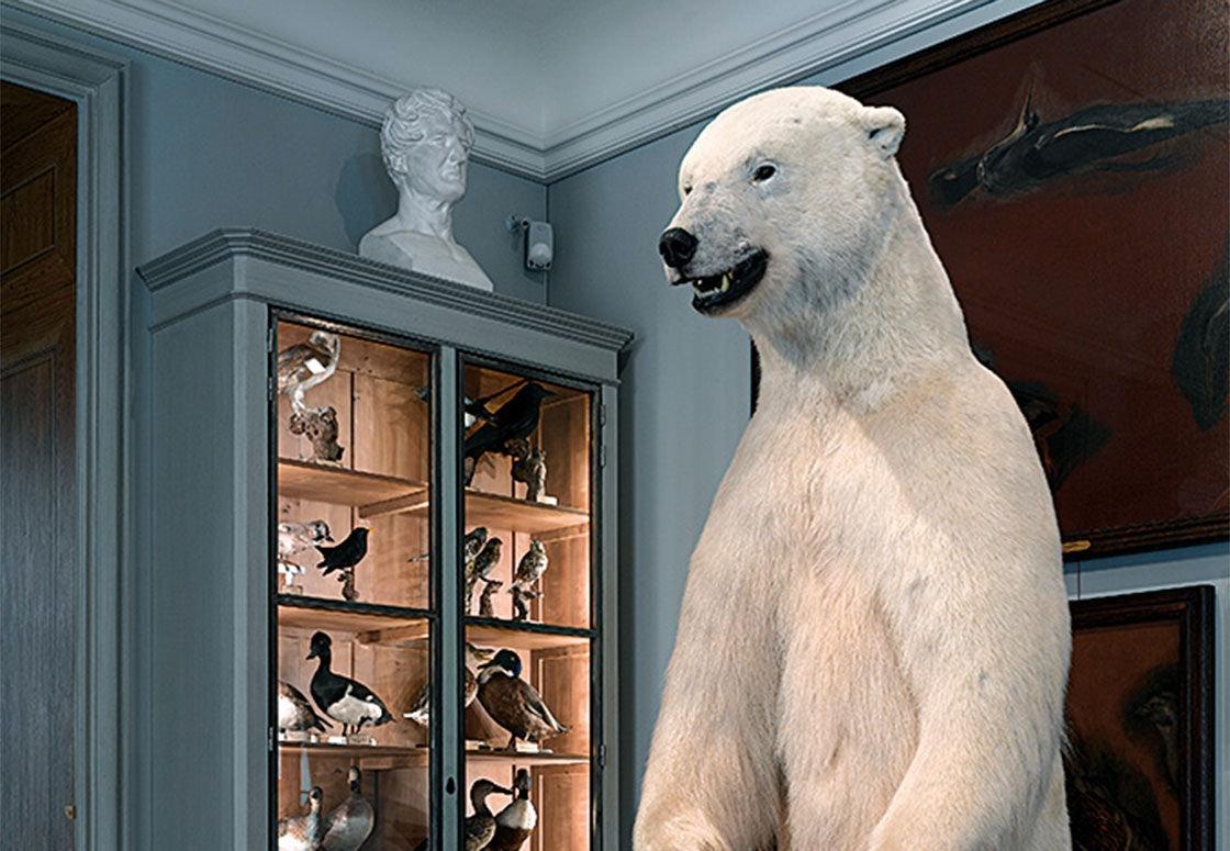 polar bear at Musée de la chasse et da la nature