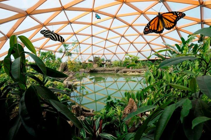 plants and butterflies at Amazonica