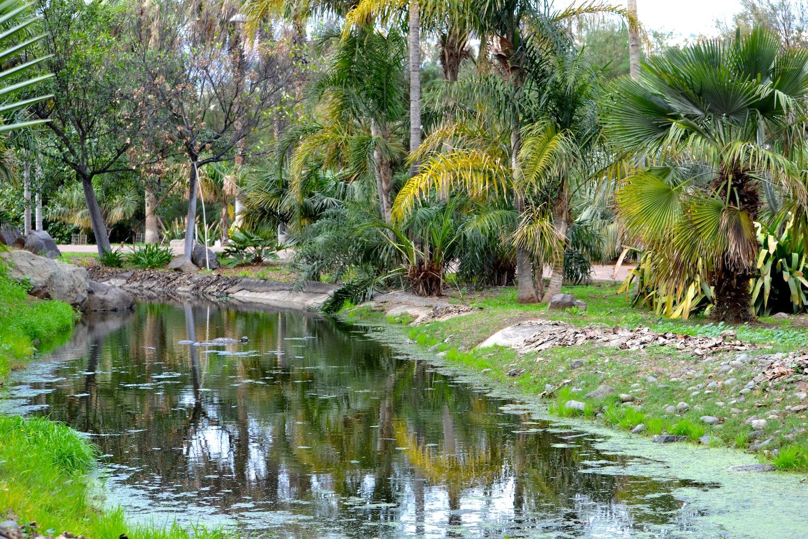 Palmetum botanical garden