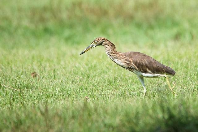 a bird in Suan Rot Fai