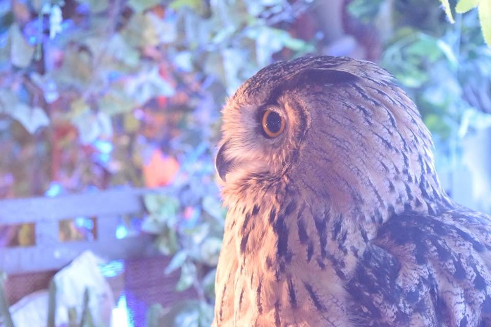 Tokyo - Forest of Owl