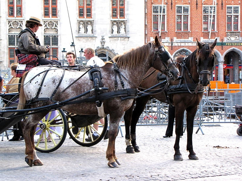 Horses with a carriage in Bruges