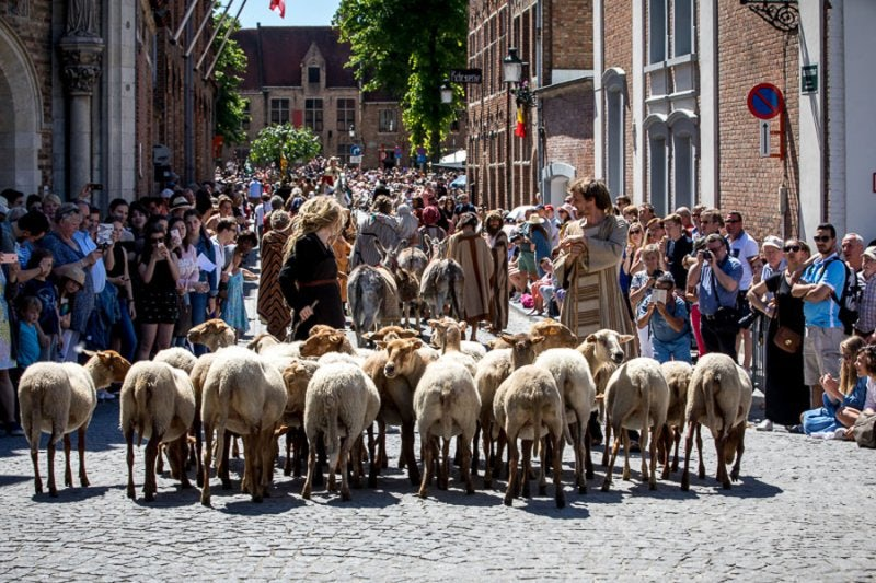 Sheep during the Holy Blood Procession