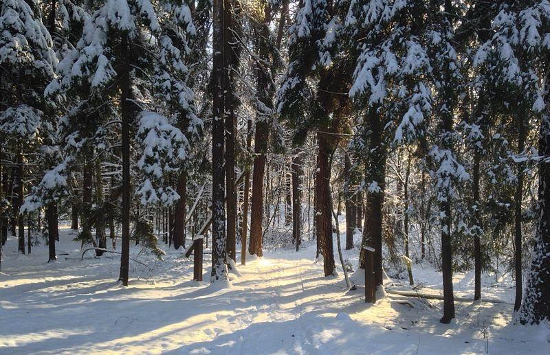 Lill-Jansskogen forrest during winter