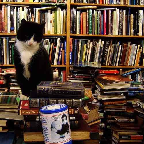 a cat on tops of books at  Voltaire and Rousseau store