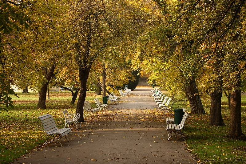 benches and trees at Vojan Gardens
