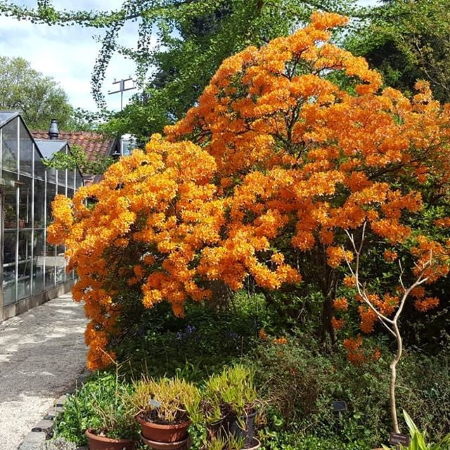 a tree with orange flowers at the Trompenburg Tuinen