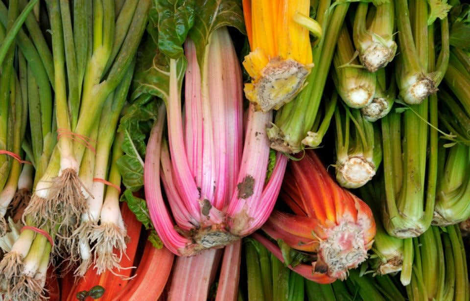 close-up of rhubarb and other vegetables
