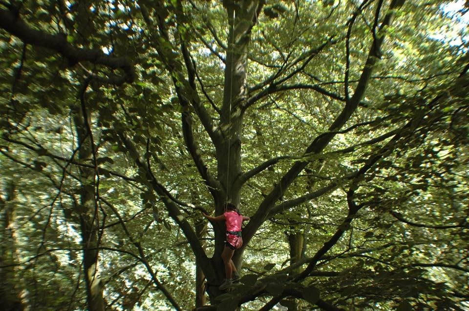 a child climbing a tree in the Hague