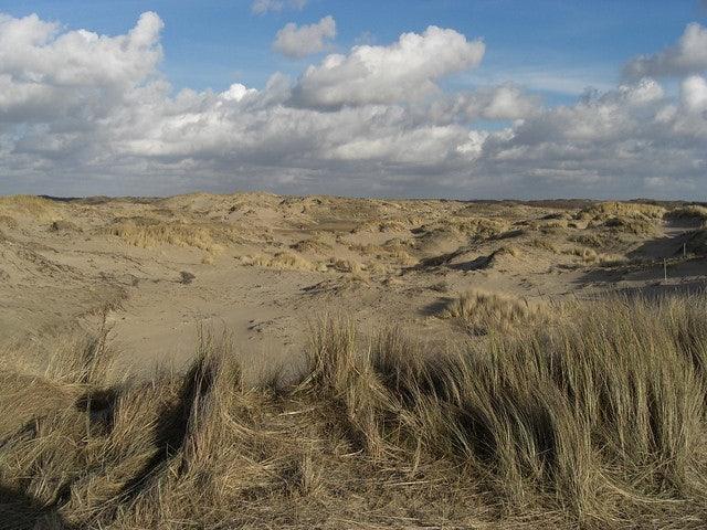 Meijendel dunes nearby The Hague, Netherlands