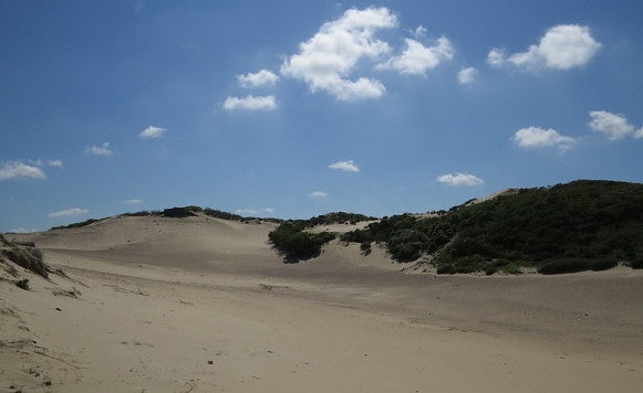 dunes against a blue sky at the Westduinpark in the Hague