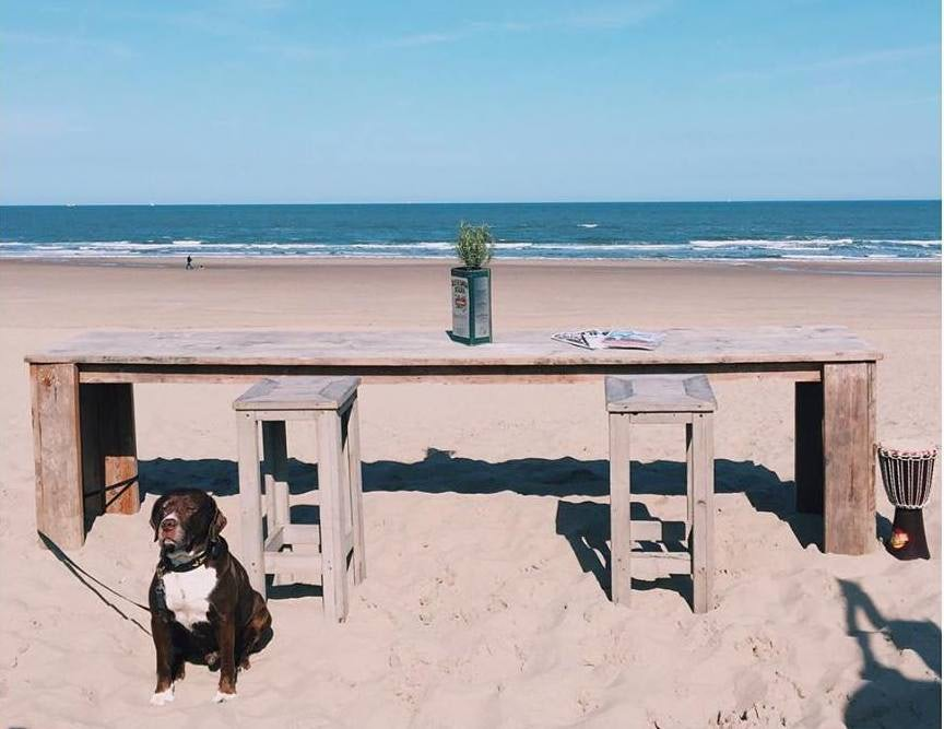 a dog and table on the beach at Strandpaviljoen Zuid