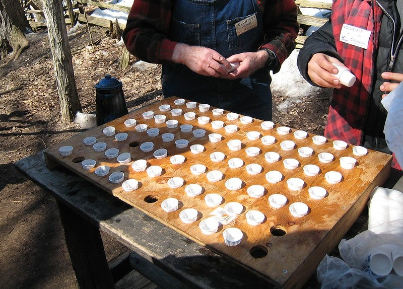 people collecting cups of maple sap at the Kortright Centre