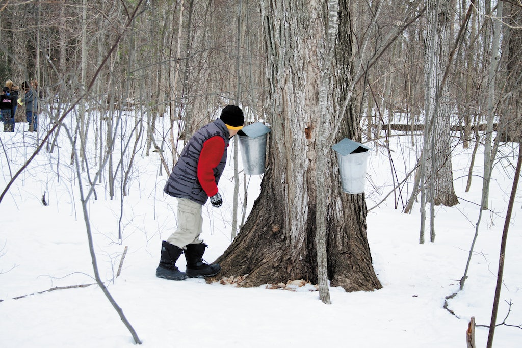 a young boy looking for maple syrup at the Terra Cotta Conversation Area
